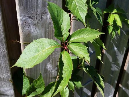 Wat is dit voor plant ???