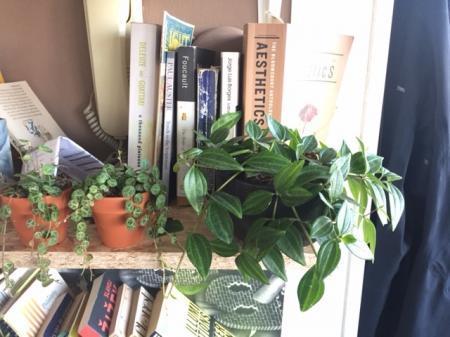 nog twee kamerplanten zonder naam!