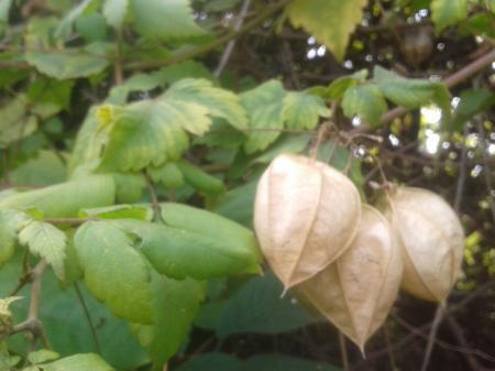 Welke plant