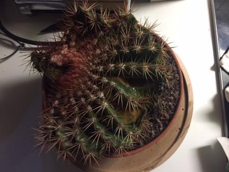 Cactus implodeert