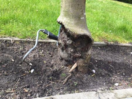 Beschadiging stam appelboom