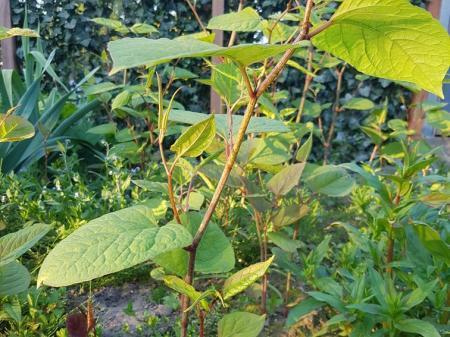 Groente tuintje welke plant heb ik hier