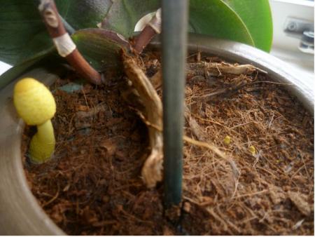 Gele paddenstoelen!