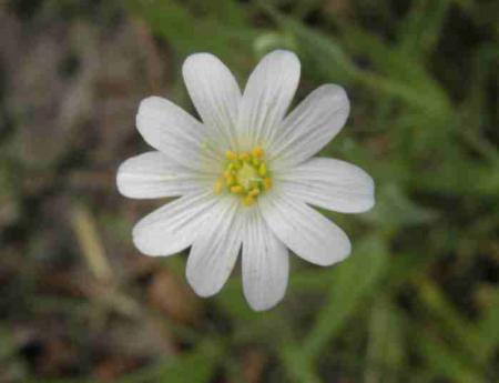 biezonder bloempje
