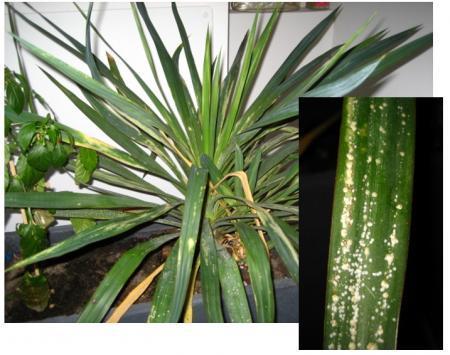 Welke plant is dit en welke ziekte heeft hij?