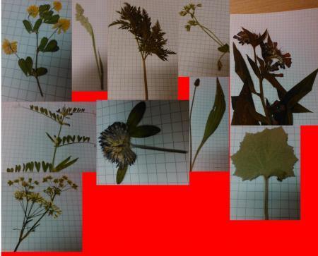 Welke planten zijn dit