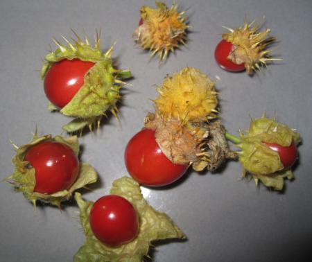 wat zijn dit voor vruchtjes