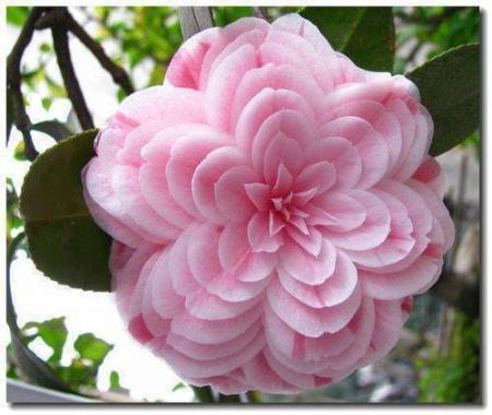 Onbekende bloem.