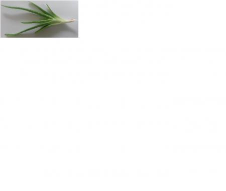 plantenidentificatie