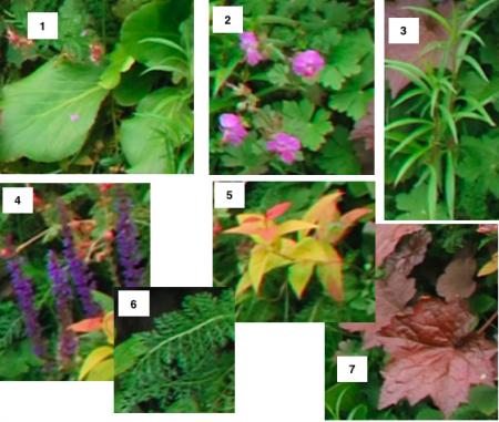 Wie kent de naam van deze planten (foto)