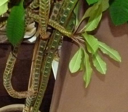 herkennen van deze plant
