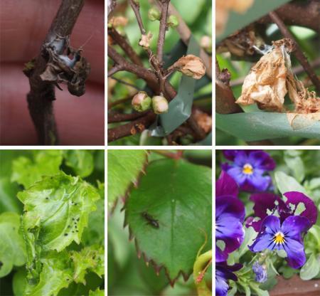 Wat is mijn tuintje aan het opeten?