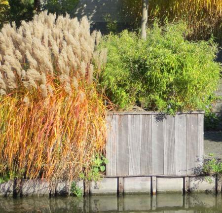 Wie kent dit siergras en bamboe?