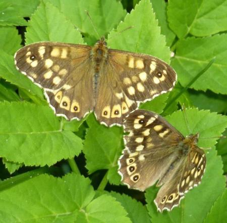Mooie vlinder, maar welke soort zou het zijn?