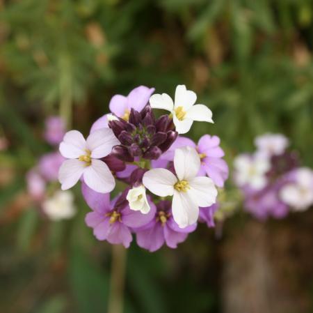 Wie weet de naam van deze bloem?