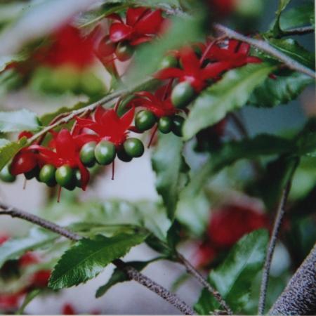 naam van de plant