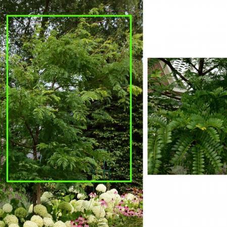 IK zoek de namen van deze plant