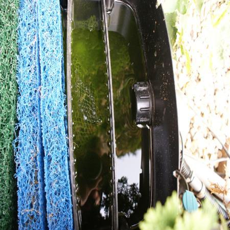 zwevende alg