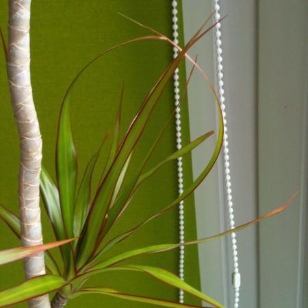 bladeren van kamerplant groeien in elkaar