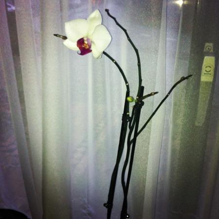 Nieuwe bloem.