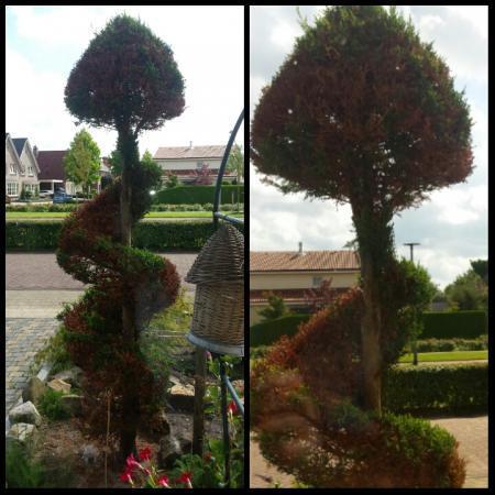 Is deze boom nog te redden ?