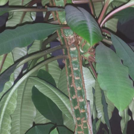 Wie weet wat voor plant dit is?