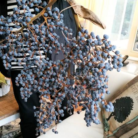 Boom/plant met blauwe bessen
