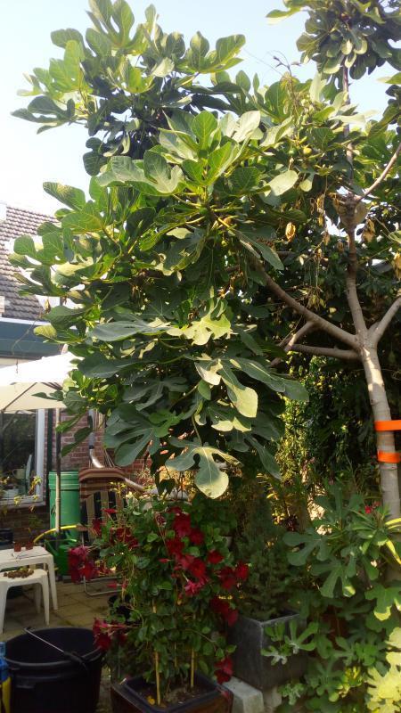 Zijkant boom