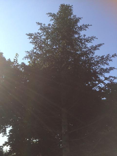 boom boven in