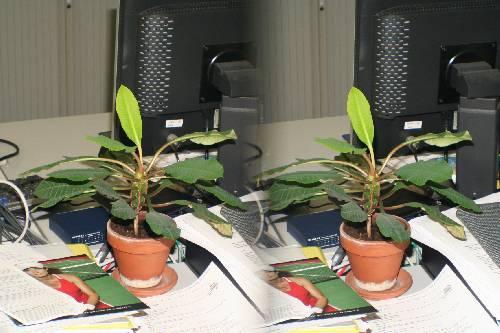 kamerplant