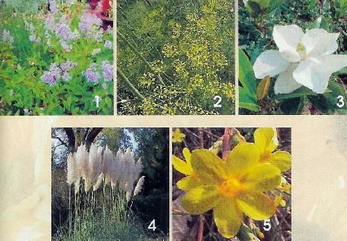 vijf onbekende planten / bloemen
