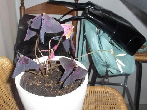 Wat is dit voor plantje?