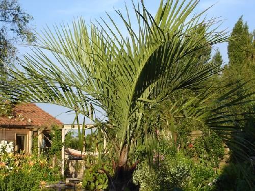 foto's van enkele palmen