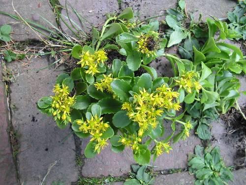 Hoe heet deze plant??