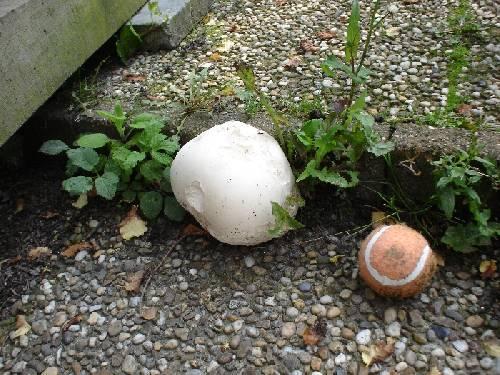 vreemde paddenstoelen