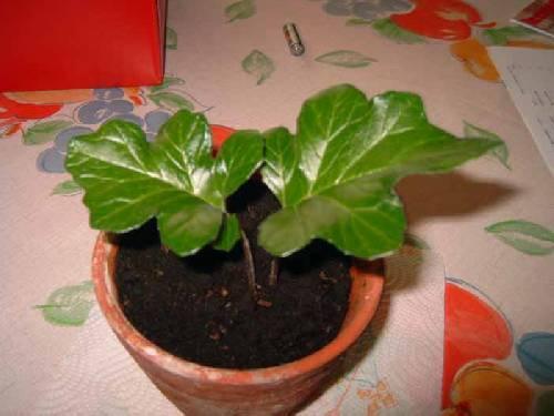 Anonieme plant
