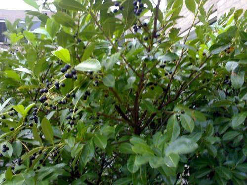 wat is dit en kan ik de vrucht eten??