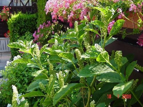 Plant in de tuin
