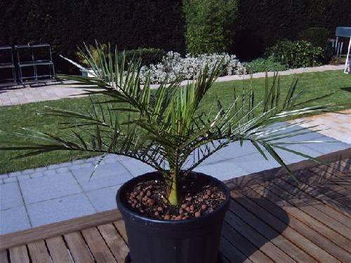 Wat is de juiste naam van deze plant?
