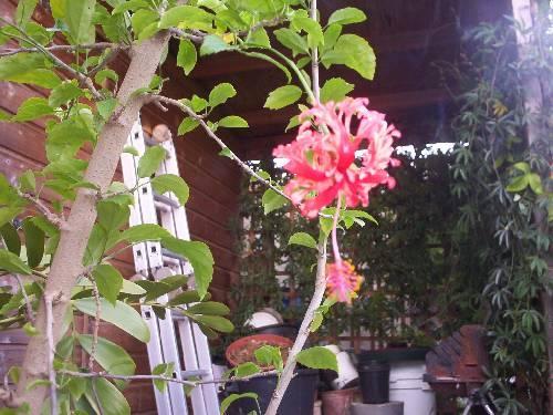 Late bloei