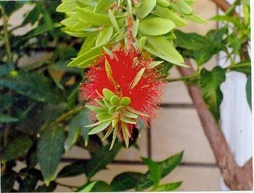 wie kent deze bloem