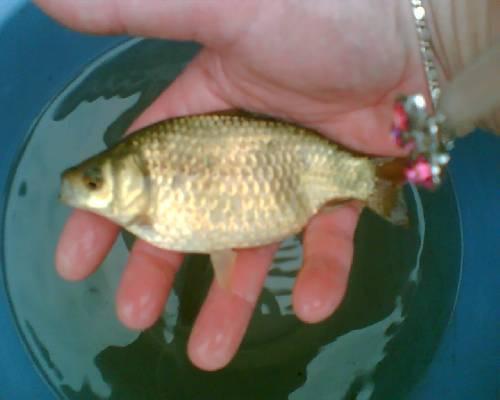 wat is dit voor soort vis
