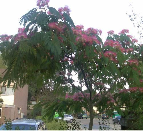 onbekende boom