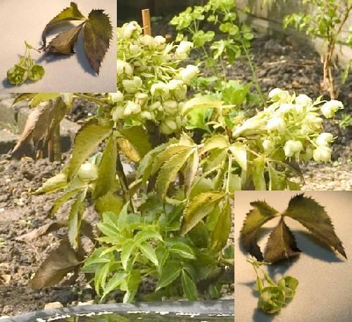 Wat is dit voor een tuinplant?