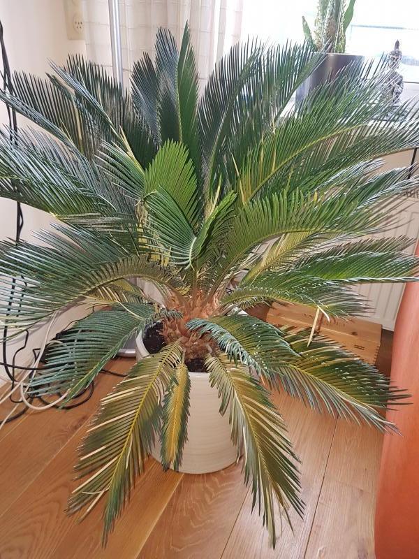 Tropische plant bladeren bruin