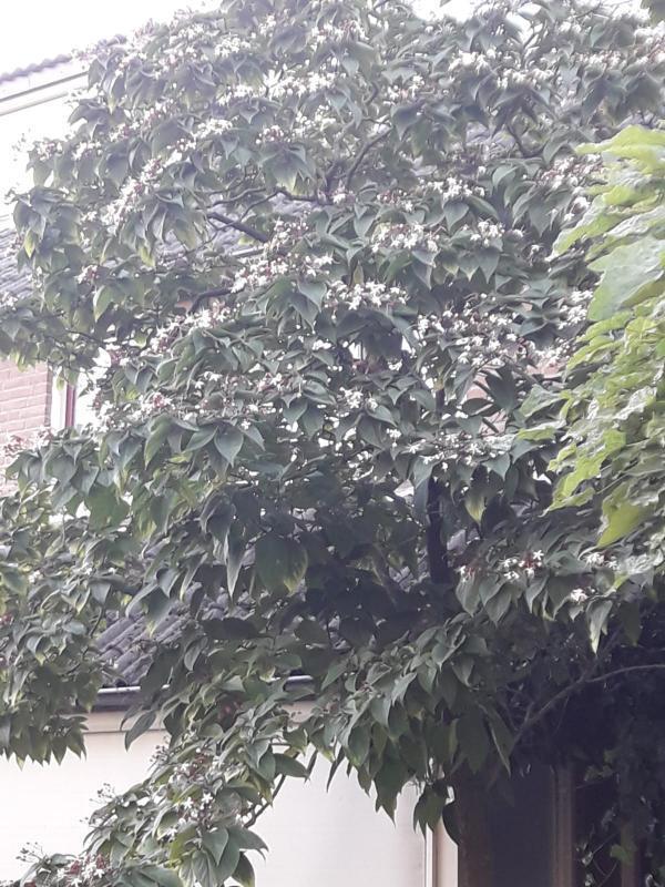 Welke boom is dit