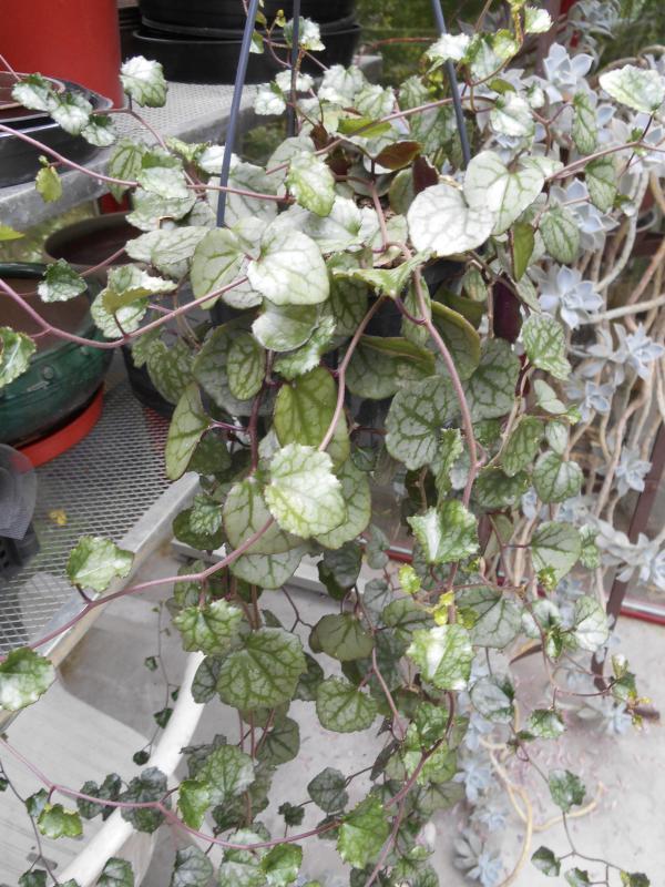 Vetplant onbekend