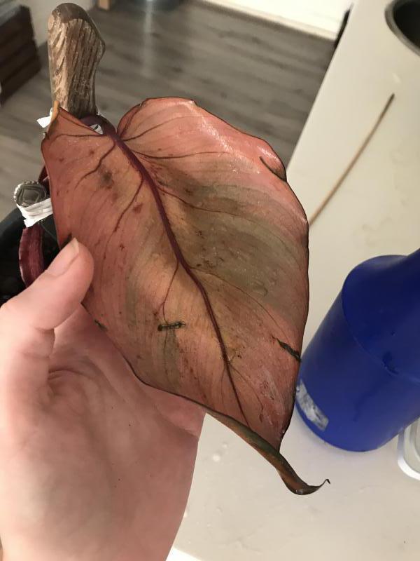 Onderkant van het blad