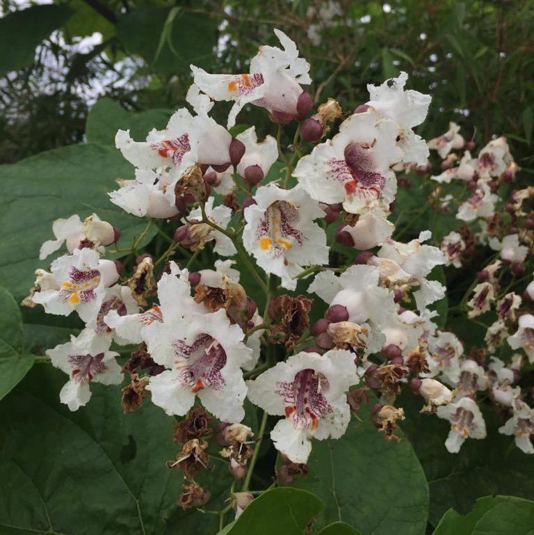foto zomer bloemen