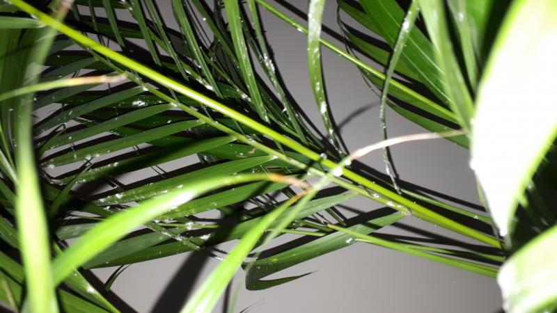 witte vlekken op plant